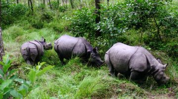 Chitwan tours, 2 nights 3 days package tour, chitwan trip, Elephant