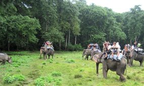 Chitwan Jungle Safari Tour Nepal Guide info