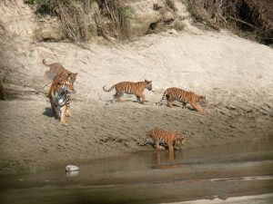 Introducing Bardia National Park Tour and Travel