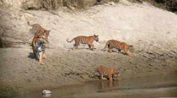 Introducing Bardia National Park Tour and Travel